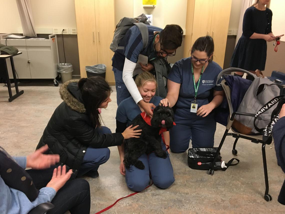 Impact of Pet Therapy on Anxiety Reduction Among Undergraduate and Graduate Nursing Students